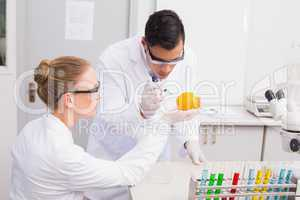 Concentrate scientists injecting orange