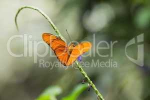 Butterfly on green stalk