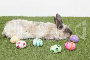 Rabbit with easter eggs on grass