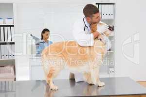 Veterinarian examining teeth of a cute dog