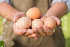 Farmer showing his organic eggs