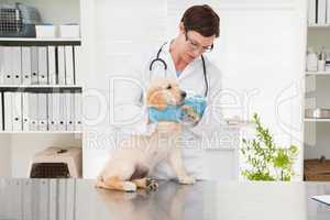 Veterinarian giving medicine to dog