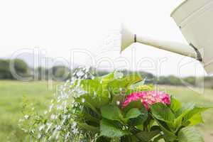 Watering can pouring water over flowers