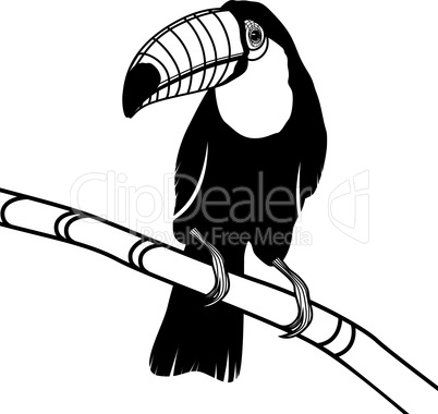 Toucan bird head vector illustration for t-shirt. Sketch tattoo design.
