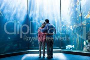 Wear view of couple looking at fish in the tank