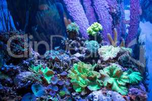 Algae, coral and stones in a tank