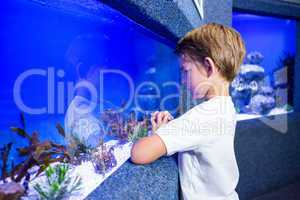 Young man looking at algae in a tank