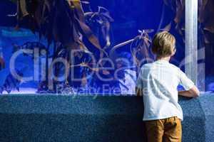 Young man looking at fish and algae tank