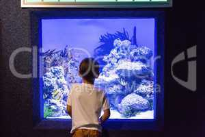 Young man looking at algae and stones in tank