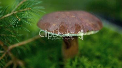 Collecting mushrooms in the forest