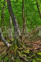 HDR image of a wooded area