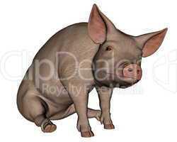 Pig sitting - 3D render