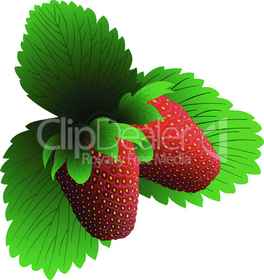 Two fresh strawberry