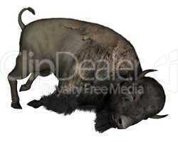 Bison dead - 3D  render