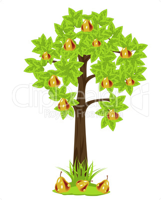 tree pear