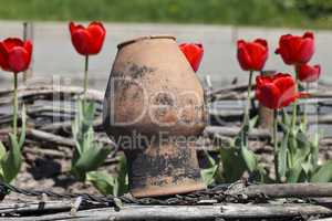 old clay jug and tulips