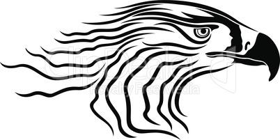 Head of menacing eagle