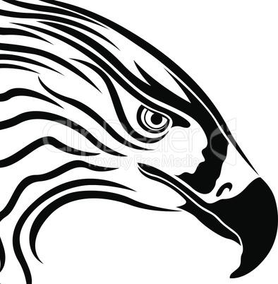 Head of Eagle with Massive Beak