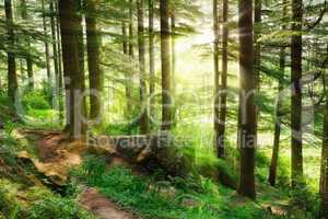 Sunrays falling into a vibrant green forest