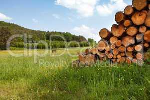 Wiese im Pfälzerwald