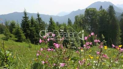 Sunny mountain landscape in the Bavarian Alps