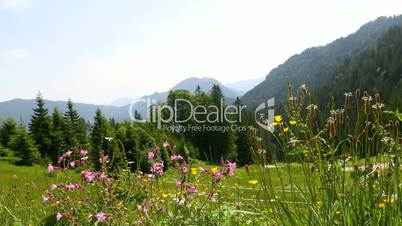 Sunny mountain landscape in the Bavarian Alps, Germany