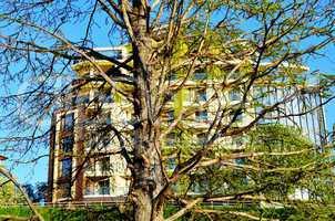 Danube river tree and architecture