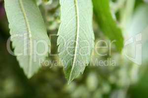 close up of green leave