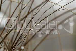Close up Wet Grasses During Autumn Season
