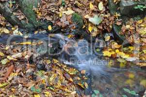 Bach im Herbstwald