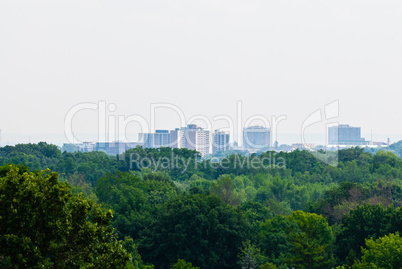 Green forest against distant buildings