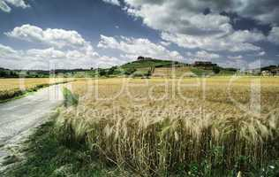 Cereal crops and farm in Tuscany
