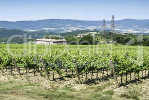 Vine plantations and farmhouse in Tuscany.