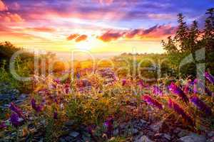 Colourful sunset landscape