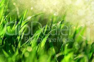 Grass macro with water in the air