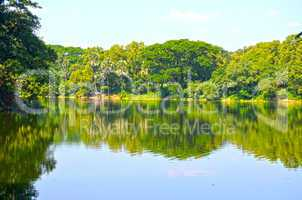 Clean lake in green spring summer forest. Blue sunny sky.