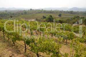 ASIA MYANMAR NYAUNGSHWE WINE