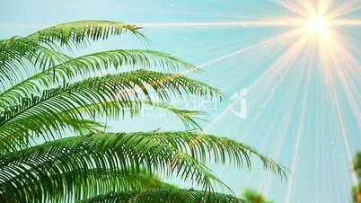 leaves of palm tree and sunrays seamless loop