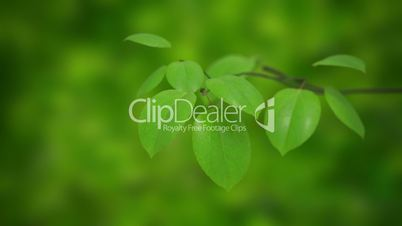 Growth branches and leaves. Isolated on white