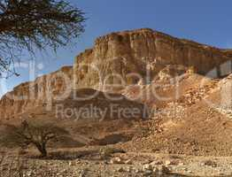 Acacia trees at the bottom of the desert hill near the Dead Sea at sunset