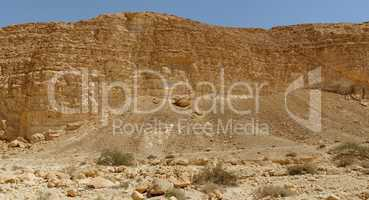 Acacia trees and bushes at the bottom of the rocky wall in the desert