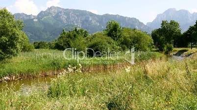 Sunny mountain landscape in the Bavarian Alps with flowers in foreground