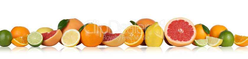 Früchte Orangen Zitronen Grapefruit in einer Reihe Freisteller