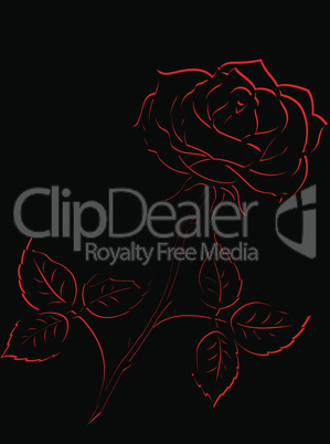 Red outline of rose flower over black