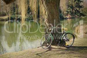 old bicycle under a tree