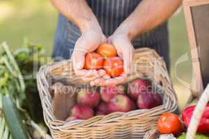 Farmer hands showing three tomatoes