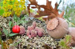 Fruits of volcanic soil