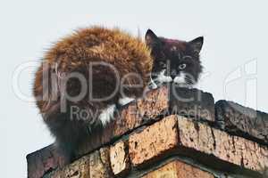 Cat on the chimney