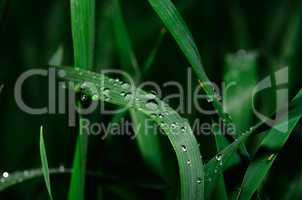 regentropfen auf pflanzen