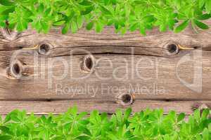 Rustikale Holzwand mit Waldmeister oben und unten